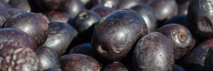 Elaboración de la aceituna: curación en seco