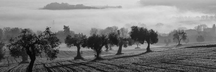 Poemas sobre olivos, legados de la literatura española