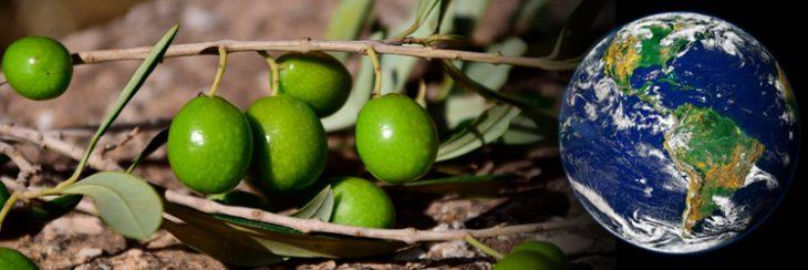 Presencia de la aceituna en Latinoamérica