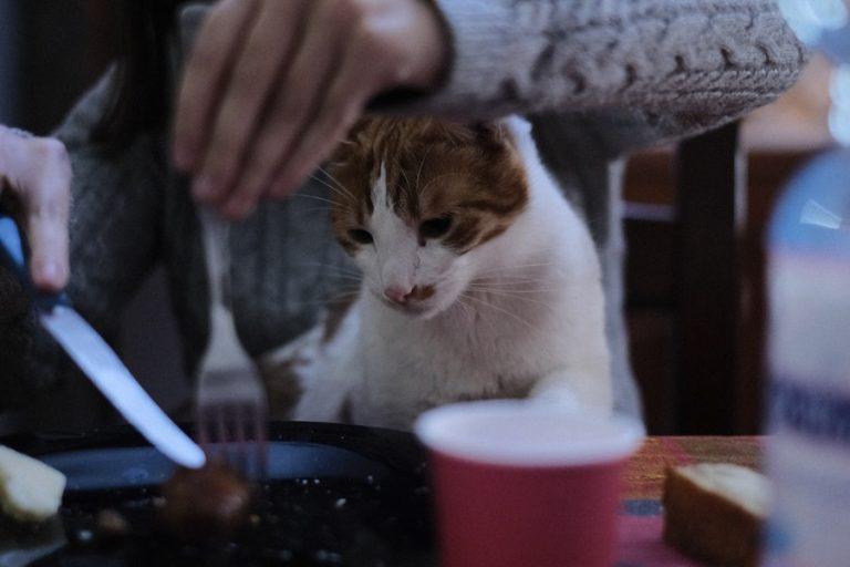 gatos, ¿locos por las aceitunas?